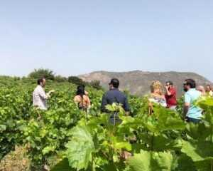 Δρόμοι του κρασιού Αχαΐας & Χελμού