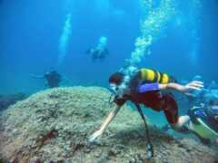 Dive Blue Dream