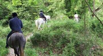 Ιππασία στα Τζουμέρκα (by Via Natura)