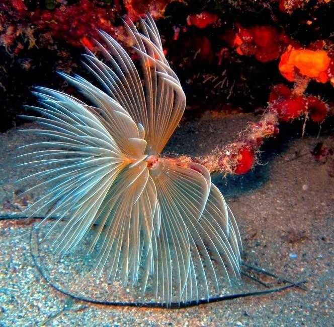 Snorkeling στο Ρέθυμνο (Evelin Dive Center)