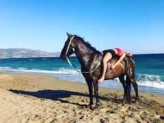 Ιππασία στο Ηράκλειο Κρήτης