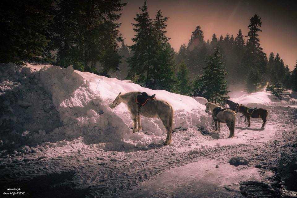 Βόλτα στο δάσος Περτουλίου με άλογα