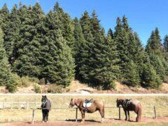 Ελεύθερη ιππασία στο Περτούλι