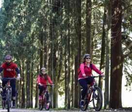 Ορεινή ποδηλασία στo Τατόι